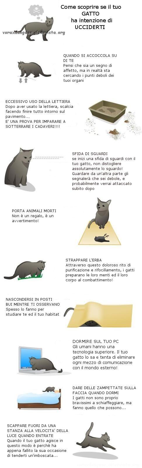 gatti-assassiniita